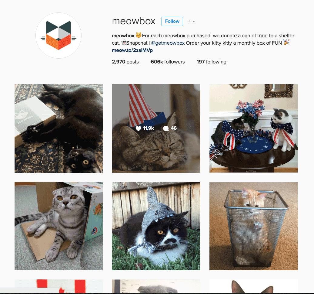 meowbox---fix